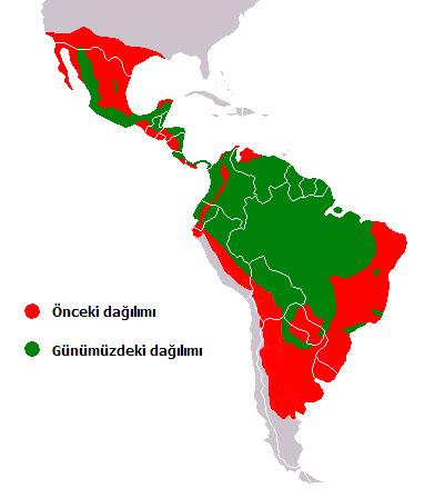 Jaguar'ın dağılımı (yaşam alanları)