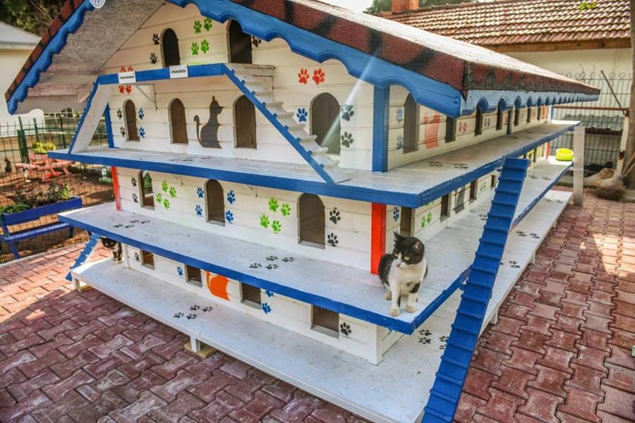 3 Katlı 64 Odalı Kedi Apartmanı - Pati Şehri